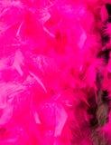 Fundo emplumado rosa Fotografia de Stock Royalty Free