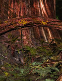 Fundo Enchanted da floresta Fotografia de Stock Royalty Free
