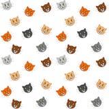 Fundo engraçado dos gatos Imagem de Stock