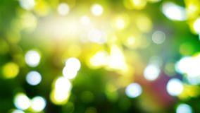Fundo ensolarado da estação com luzes naturais na folha do verão com sunlights Gr?fico dado la?os do movimento 4K video estoque