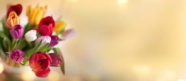 Fundo ensolarado da mola com tulipas Imagem de Stock Royalty Free