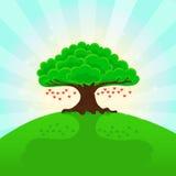 Fundo ensolarado do verão Corações na árvore Fotos de Stock Royalty Free