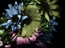Fundo escuro da flor Fotos de Stock