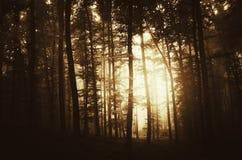 Fundo escuro da floresta Imagem de Stock