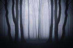 Fundo escuro da floresta com névoa surreal Fotografia de Stock Royalty Free