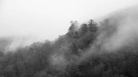 Fundo escuro nevoento abstrato da floresta fotos de stock