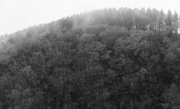 Fundo escuro nevoento abstrato da floresta, monocromático foto de stock royalty free