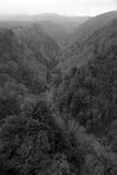 Fundo escuro nevoento abstrato da floresta, monocromático fotografia de stock