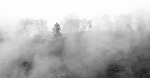 Fundo escuro nevoento da floresta fotografia de stock