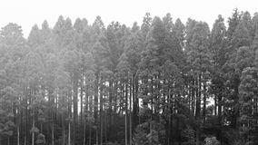 Fundo escuro nevoento da floresta, monocromático imagens de stock royalty free