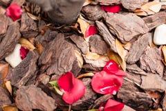 Fundo esmagado da textura da casca de árvore com folhas de outono, seixos Imagens de Stock