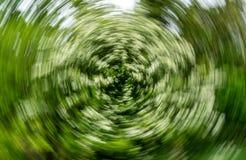 Fundo espiral abstrato do efeito - árvore do espinho imagens de stock