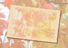 Fundo estilizado do outono com quadro para o texto Imagens de Stock Royalty Free