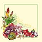 Fundo exótico do verão com fruto Imagem de Stock Royalty Free