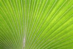 Fundo exótico verde grande da licença Foto de Stock Royalty Free