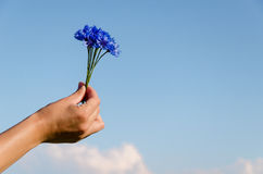 Fundo fêmea do céu azul da mão do ramalhete da centáurea Imagens de Stock Royalty Free