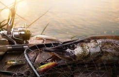 Fundo feliz da pesca; Equipamento de pesca e troféu Pike Imagem de Stock Royalty Free