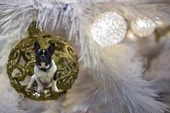 Fundo festivo do ano novo para o cão 2018 amarelo Imagem de Stock Royalty Free