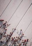 Fundo festivo do inverno Madeira branca e bagas vermelhas do inverno do espinho Fotografia de Stock Royalty Free