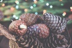 Fundo festivo tradicional muito protuberância marrom no ramo do verde spruce fotos de stock royalty free