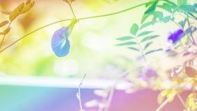 Fundo filtrado das flores cor bonita imagem de stock
