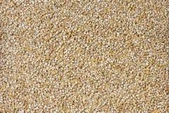 Fundo fino da textura da cevada à terra nutrition bio Ingrediente de alimento natural foto de stock royalty free