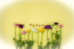 fundo flatlay do conceito da mola com flores foto de stock