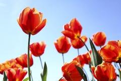 Fundo floral. Fotos de Stock Royalty Free
