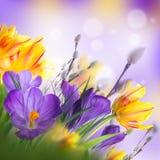 Fundo floral Foto de Stock