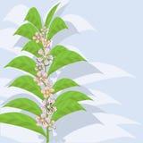 Fundo floral abstrato. Fotos de Stock