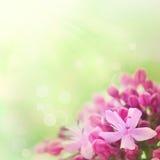 Fundo floral abstrato bonito Fotografia de Stock Royalty Free