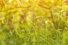 Fundo floral abstrato com mola e grama e plantas do verão na luz solar imagem de stock royalty free