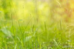 Fundo floral abstrato com mola e grama e plantas do verão na luz solar imagem de stock