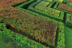 Fundo floral abstrato do teste padrão Foto de Stock