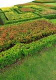 Fundo floral abstrato do teste padrão Foto de Stock Royalty Free