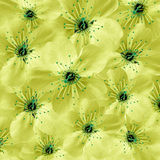 Fundo floral amarelo Grande cereja branca das flores colagem floral Composição da flor Foto de Stock
