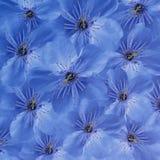 Fundo floral azul Grande cereja branca das flores colagem floral Composição da flor Foto de Stock Royalty Free
