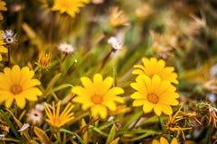 Fundo floral bonito de Defocus Fotos de Stock Royalty Free