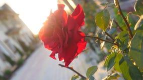 Fundo floral bonito na luz do por do sol do sol do verão da noite Imagens de Stock Royalty Free