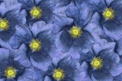 Fundo floral colagem floral Composição da flor closeup Imagens de Stock Royalty Free
