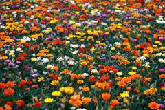 Fundo floral colorido Fotografia de Stock Royalty Free