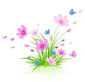 fundo floral com as flores vermelhas do cosmos Fotos de Stock