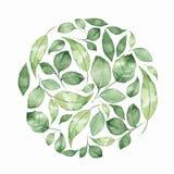 Fundo floral com as folhas verdes da aquarela Foto de Stock Royalty Free