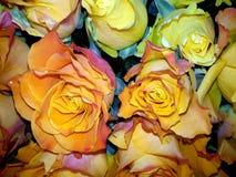 Fundo floral com as rosas do amarelo e de chá imagem de stock