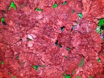 Fundo floral com cravos vermelhos foto de stock