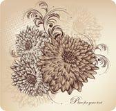 Fundo floral com crisântemos de florescência, ha ilustração do vetor