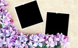 Fundo floral com fotos em branco Fotografia de Stock Royalty Free