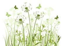 Fundo floral com grama e dentes-de-leão Imagem de Stock Royalty Free