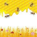 Fundo floral com mel Foto de Stock Royalty Free