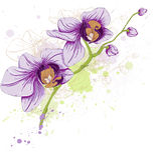Fundo floral com orquídeas Imagem de Stock
